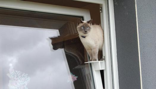 chat-passerelle-676