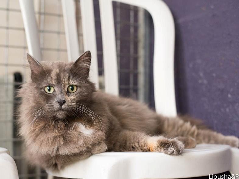 liousha-compagnie-des-chats6m