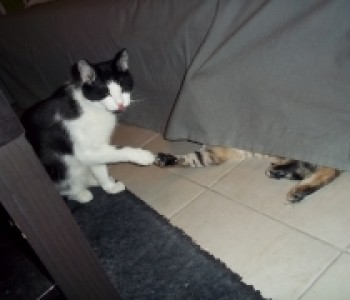 thumbs_flop_02
