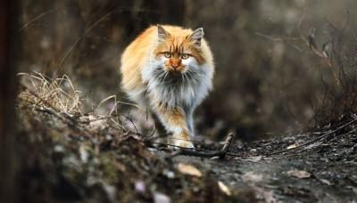 chats-australie-euthanasie-676_bis