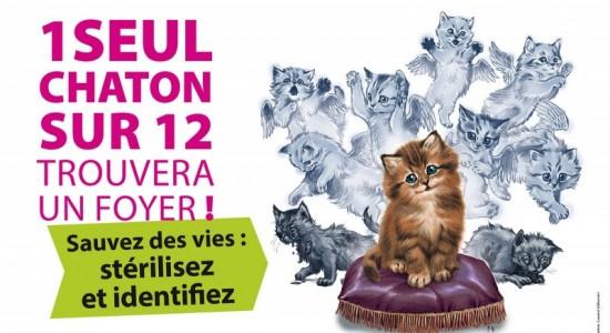 un-chaton-sur-12