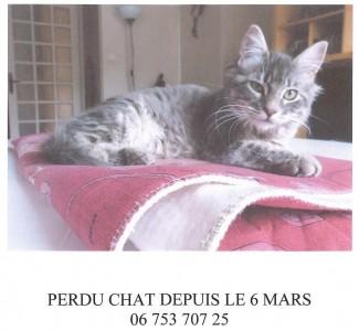 gribouille-chat-perdu-mars-2017