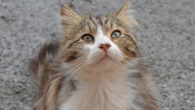 petition-chat-draguignan