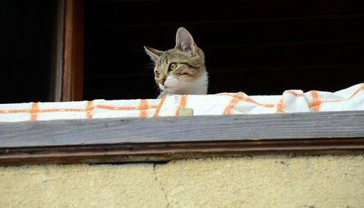 chat-balcon-676