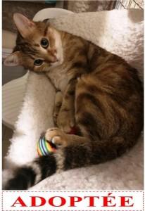 mitsou-adoptee