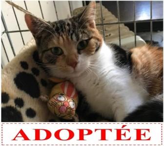 naya-adoptee