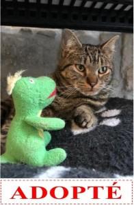 nestor-adopte