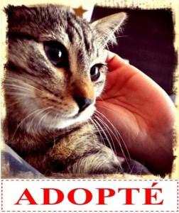 oren-adopte