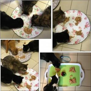 repas-de-la-cie-des-chats