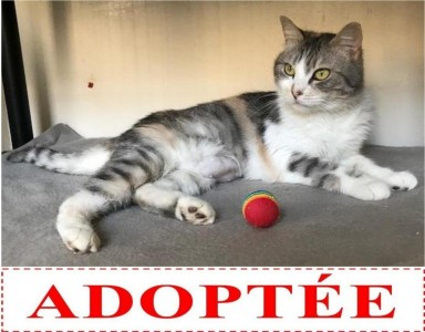 patty-adoptee
