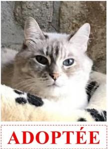nala-adoptee-site-jpeg