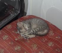 caty-3
