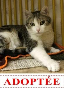 esmeralda-adoptee-site