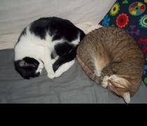 Flop et la chatte de Nathalie