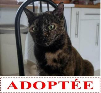flora-adoptee