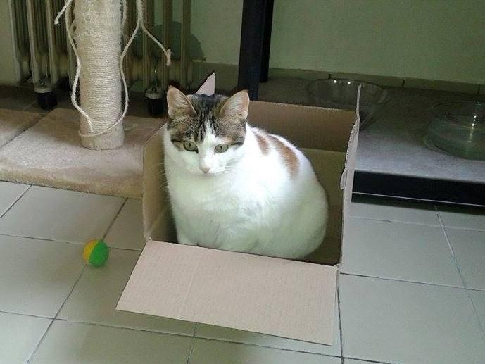 joy-carton