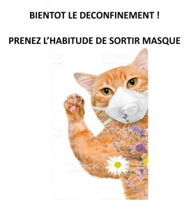 CHAT-MASQUE-