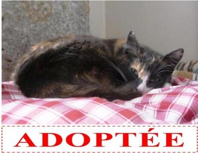 clio-adoptee