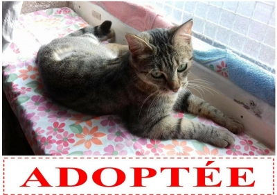 finette-adoptee