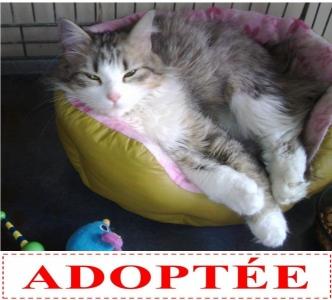 majie-adoptee