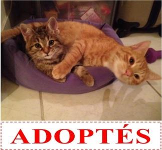 nabucco-et-nema-adoptes