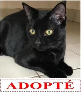 norton-adopte