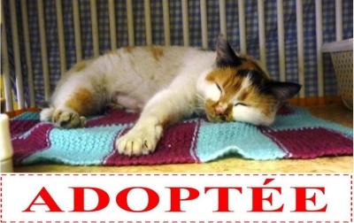 twingo-adoptee