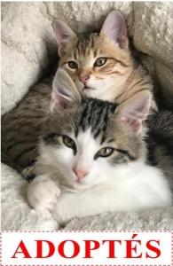 honey-et-only-adoptes