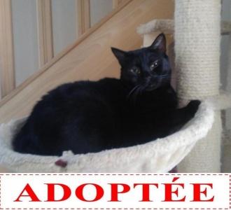 pepita-adoptee