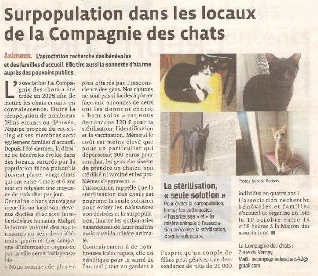 article-cie-des-chats-2