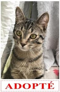 Rémy-adopté-JEPG
