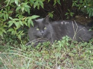 chopin caché dans un bosquet