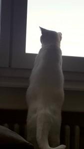 saska debout regarde par la fenêtre