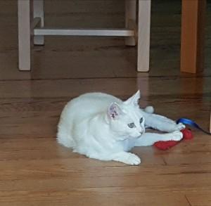 saska est allongée sur le parquet avec un jouet