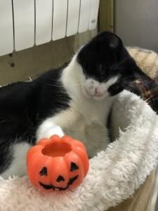 Lucky joue avec une bougie citrouille pour Halloween