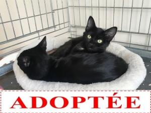 les deux chatons adoptées dans leur panier