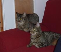 Tichoz et Eloa (actuellement Pastis et Pasoa)