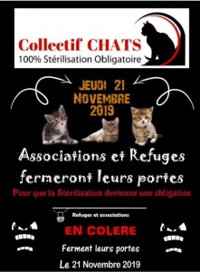 collectif-chats-jpeg