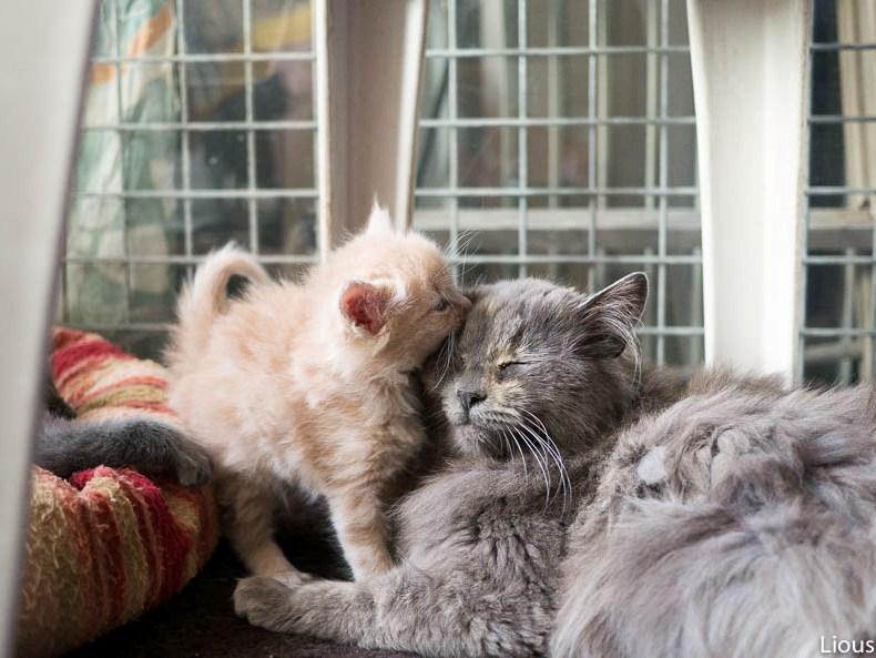 liousha-compagnie-des-chats6d