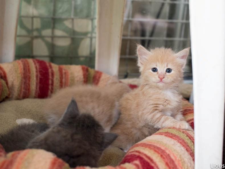 liousha-compagnie-des-chats6l