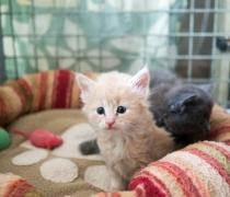 liousha-compagnie-des-chats6b