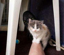 liousha-compagnie-des-chats6n