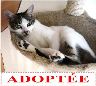 linette-adoptee