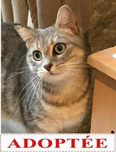 bella-adoptee