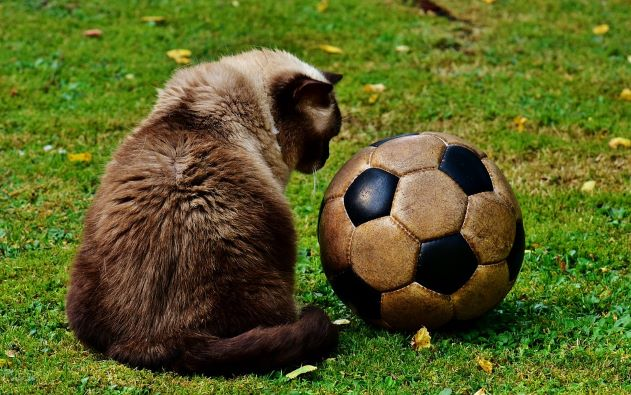 chat-ballon-foot