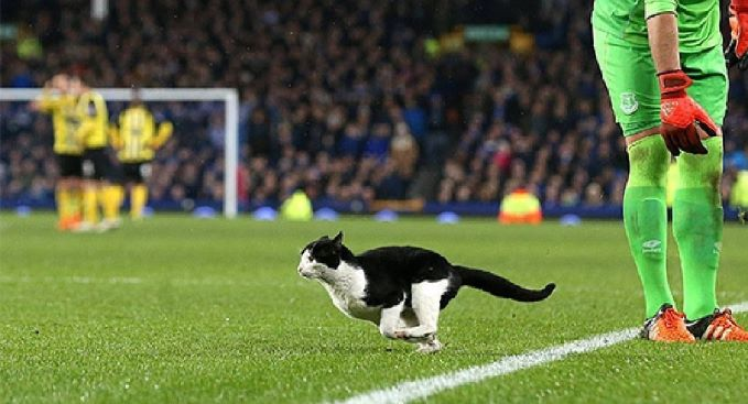 chat-match-foot