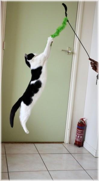 chat-saut