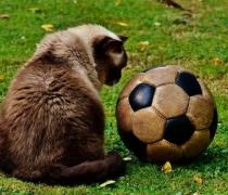 chat-ballon-foot