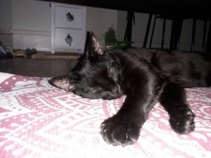 Mika dort sur le tapis