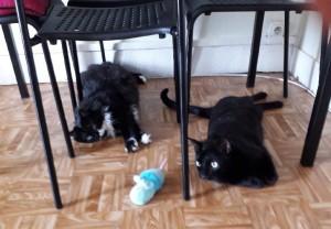 Mika et tanya en rain de jouer sous la table
